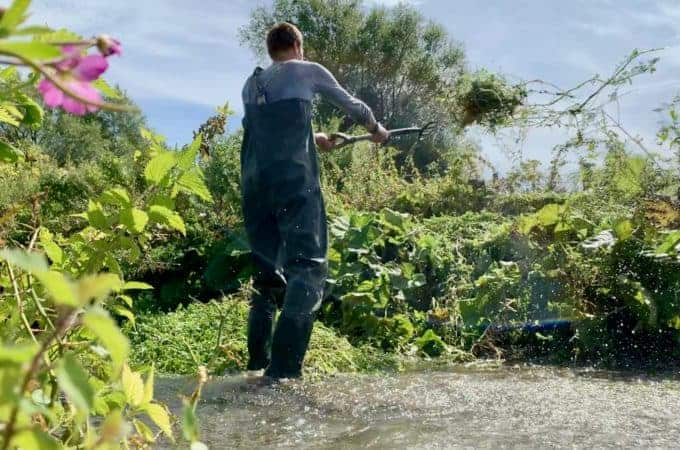 Clearing the watercress